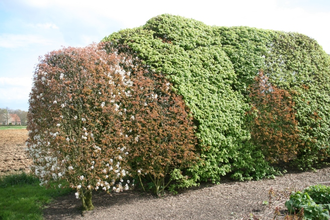 Mixed Hedges