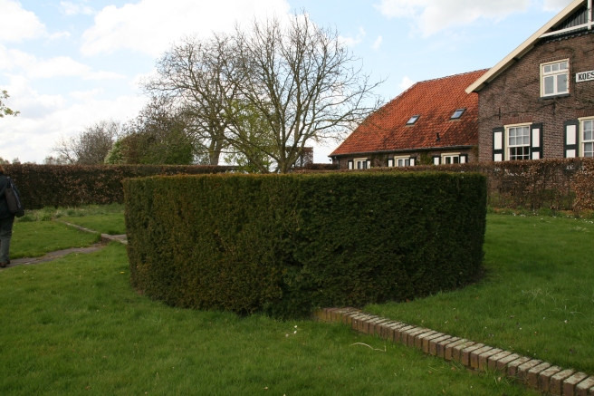 A round yew hedge