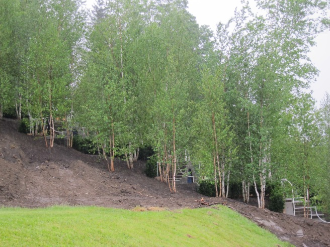 The birches in place, sideview