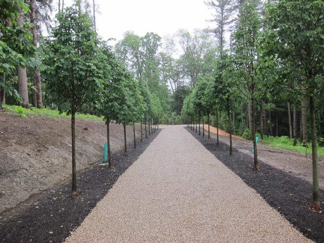 The Linden Allee restored