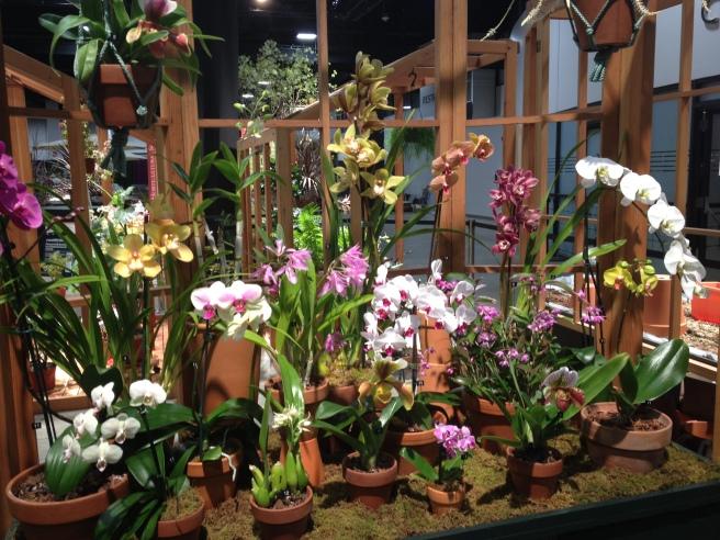 Noanett Garden Club Orchid Display